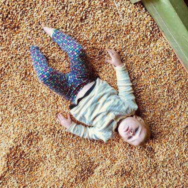 corn pit1