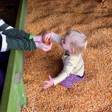 corn pit2