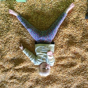 corn pit3