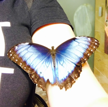 butterfly on my arm